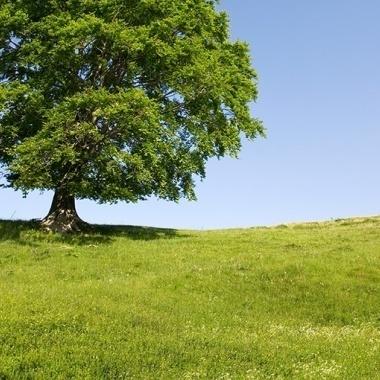 Verlängerung der Optionsfrist bei Land- und Forstwirten