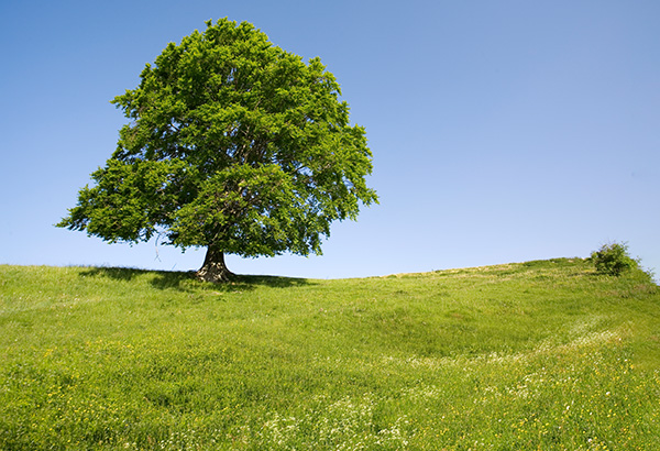 Welche Einkünfte aus Land- und Forstwirtschaft können steuerlich auf drei Jahre verteilt werden?